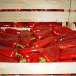 piperka-crvena