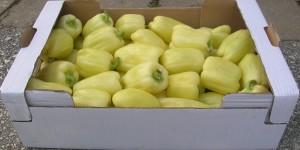 vegetable 006 - Copy